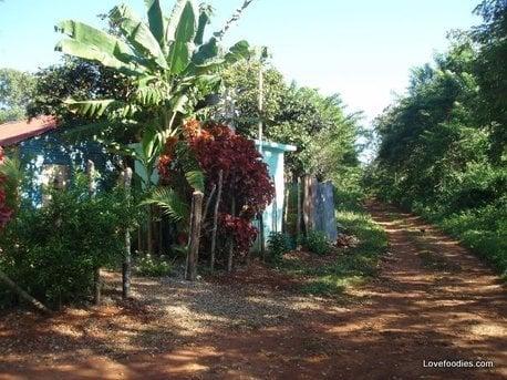Spicy Caribbean Pineapple or Mango Chutney, a Caribbean garden