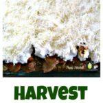 Harvest Lasagne