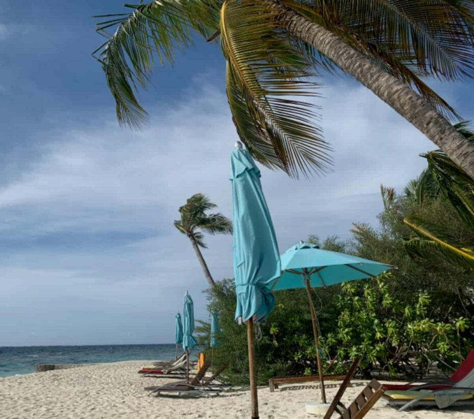 Maldivian coconut trees
